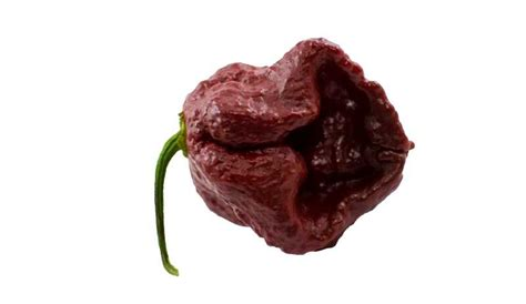 Top 10 World's Hottest Peppers 2016