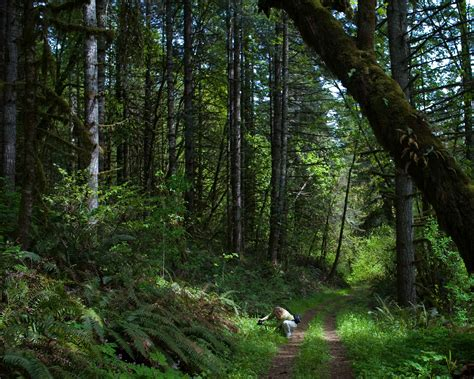 Free picture: female, trail, wild, green, forest